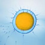Fertility Benidorm Historia de la reproducción asistida